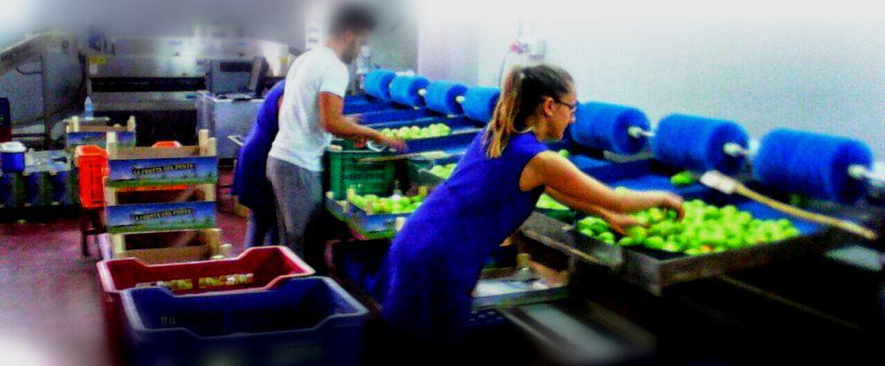 prodizione-frutta-fresca-001