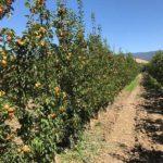 Frutta Fresca 2017